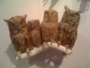 Eastern Screech Owls, with an artist intervention during Eye Spy