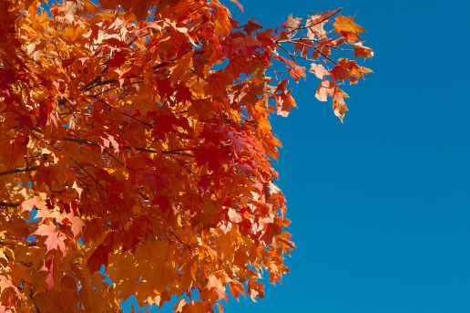 Fall Foliage by Dori, Creative Commons license.  Click image for source.