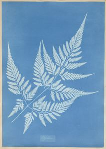 Cyanotype by Anna Atkins, 1850, from SFMOMA via Creative Commons.  Click for source.
