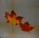 Colored Leaves by Adrianne Evans, on view in Branching Out starting Sept. 27