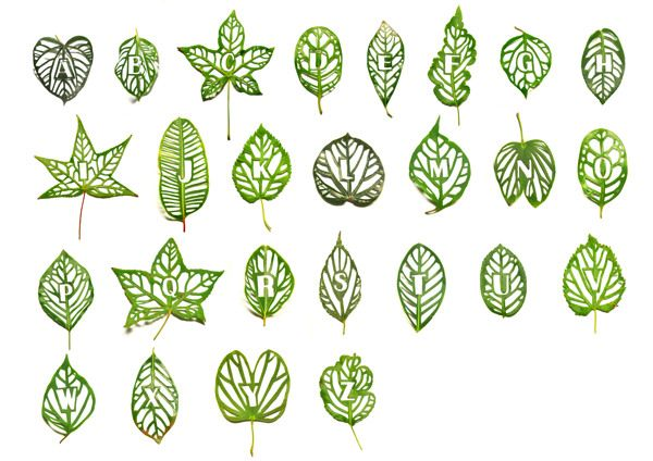 Leaf Type by Mei Linn Chan.  Click for source.