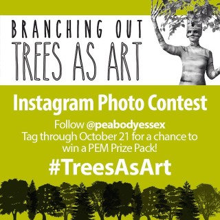 instagram trees challenge