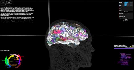 brainmap-site